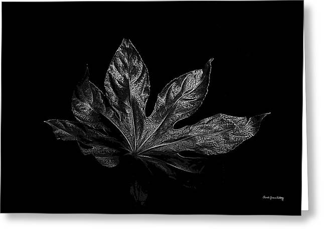 Photographic Art For Sale Greeting Cards - Leaf in the Dark Greeting Card by Randi Grace Nilsberg