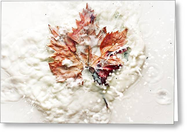 Dew Greeting Cards - Leaf leap Greeting Card by Ivan Vukelic