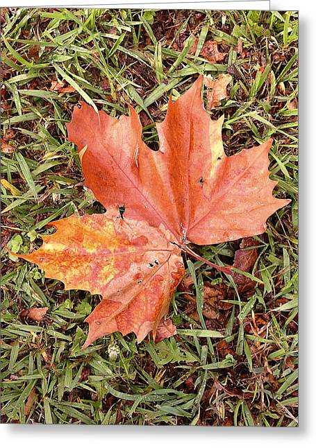 Autumn Photographs Greeting Cards - Leaf Greeting Card by Les Cunliffe