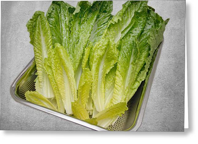 Leaf Lettuce Greeting Card by Andee Design