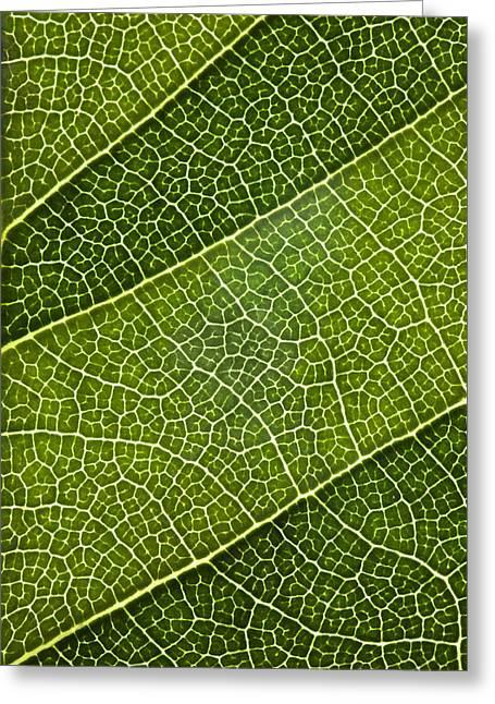 Green Foliage Greeting Cards - Leaf Lines III Greeting Card by Natalie Kinnear