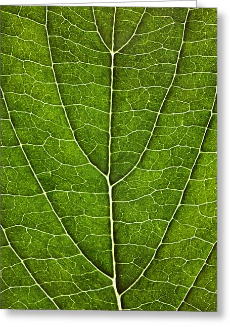 Green Foliage Greeting Cards - Leaf Lines VII Greeting Card by Natalie Kinnear