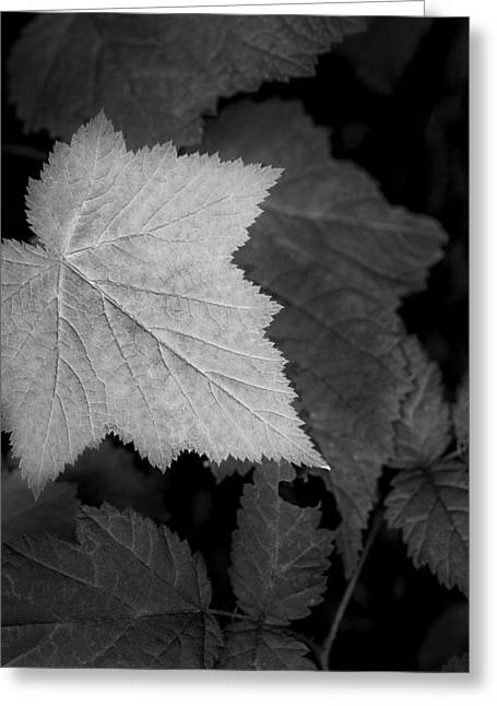 Kitchen Photos Greeting Cards - Leaf me Alone Greeting Card by Jon Glaser