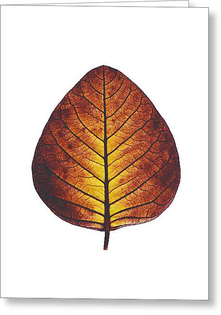 Sophisticated Greeting Cards - Leaf of serenity Greeting Card by Sumit Mehndiratta