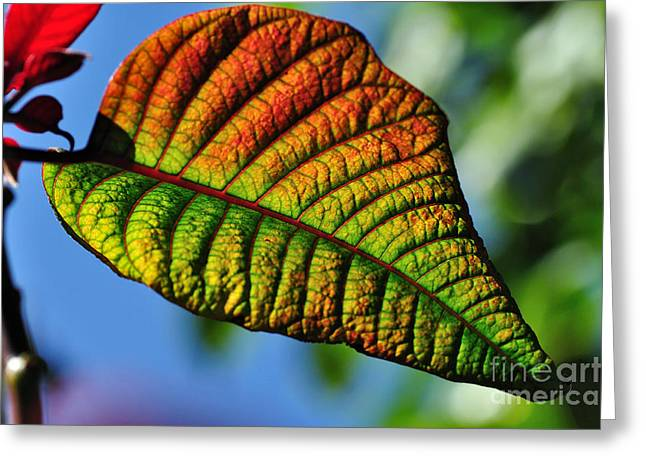 Green And Yellow Greeting Cards - Leaf of the Poinsettia Greeting Card by Kaye Menner