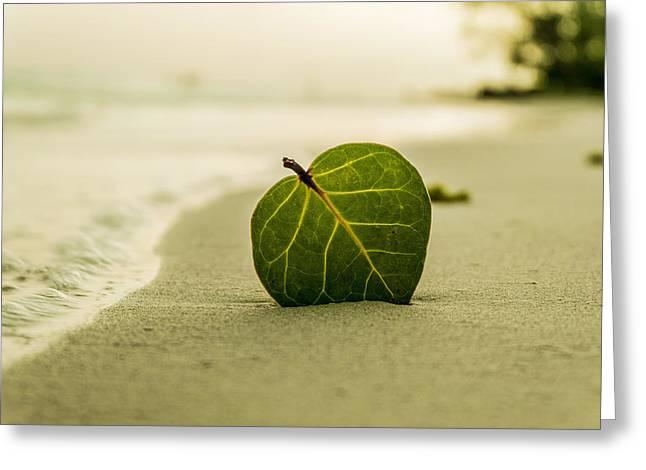 Leaf On A Beach Greeting Card by Mountain Dreams
