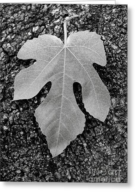 Uc Davis Photographs Greeting Cards - Leaf on Bark Greeting Card by Andrew Brooks
