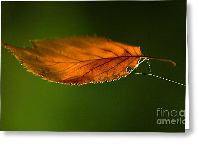 Green Leafs Greeting Cards - Leaf on Spiderwebstring Greeting Card by Iris Richardson