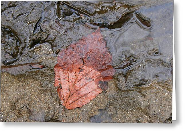 Leaf On The Riverbank Greeting Card by Paula Tohline Calhoun