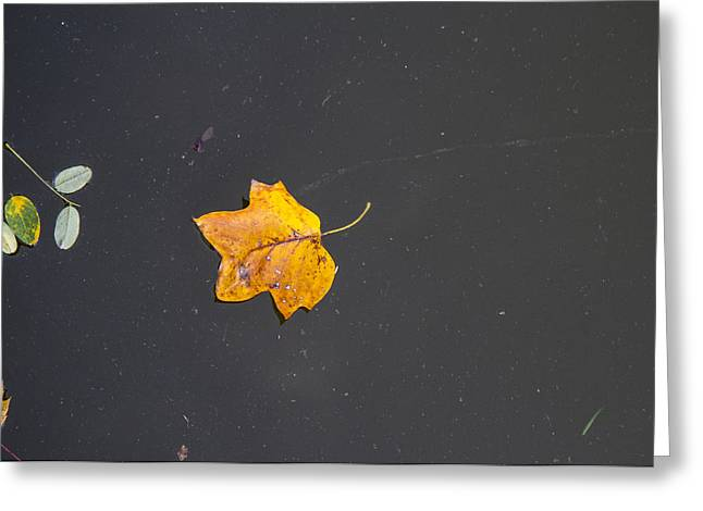 Leaf On Water Study  Greeting Card by Tim Fitzwater