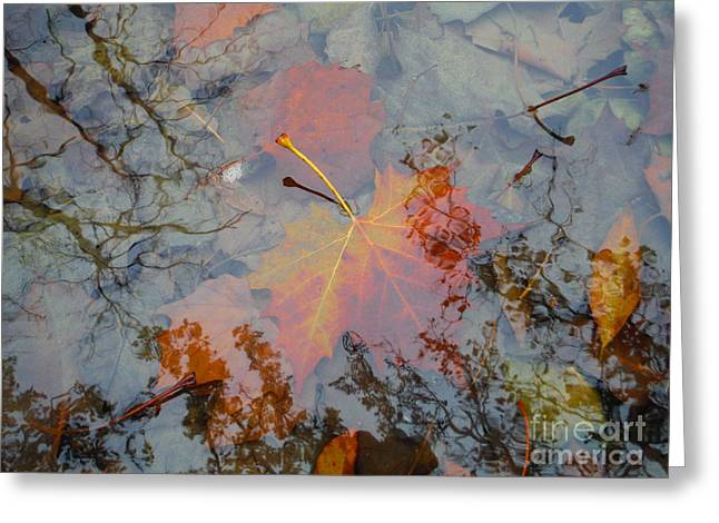 Tree Leaf On Water Greeting Cards - Leaf Series 41 Greeting Card by Paddy Shaffer