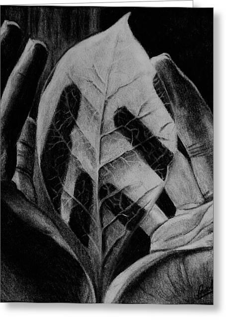 Veins Drawings Greeting Cards - Leaf Shadowed Hand Greeting Card by Caroline  Reid