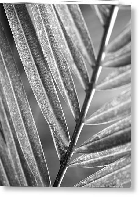 Florida Flowers Pyrography Greeting Cards - Leaf Shapes VI Greeting Card by Eyzen Medina
