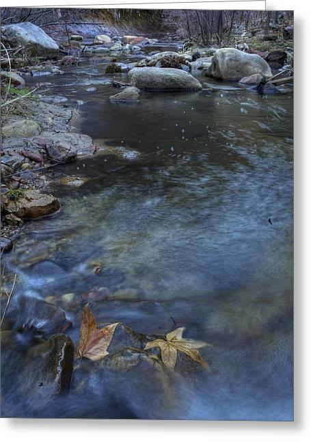 West Fork Greeting Cards - Leaf Swirls Greeting Card by Sue Cullumber