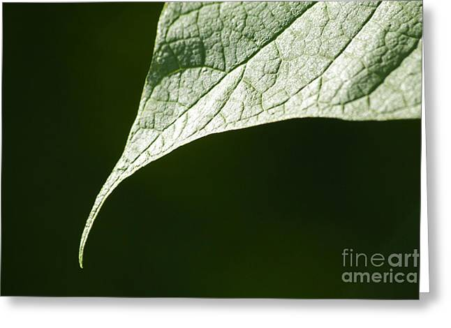 Up Close Flowers Greeting Cards - Leaf Greeting Card by Tony Cordoza