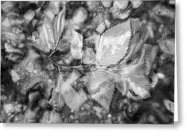 Petrifying Springs Greeting Cards - Leaf Under Water Greeting Card by Chris Tobias