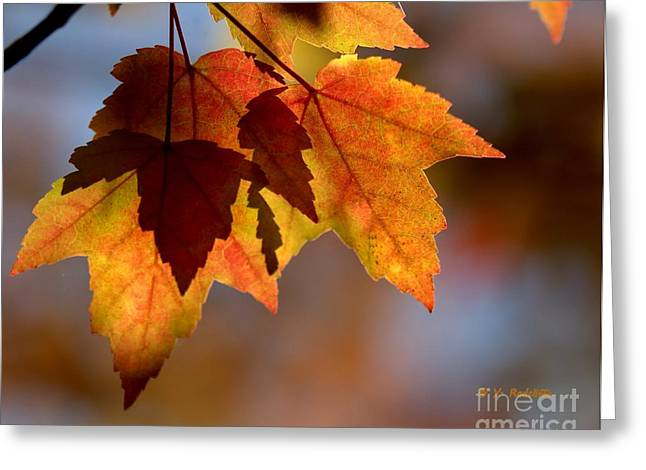Fallscape Greeting Cards - Leaf Upon Leaves Greeting Card by Yvette Radcliffe