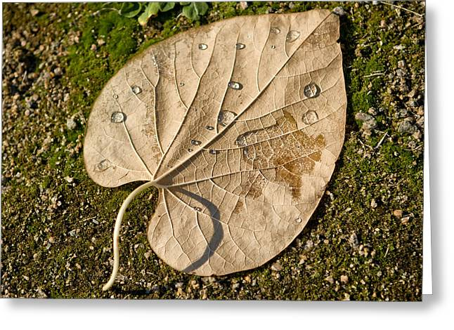 Leaf With Drops Greeting Card by Zoriy Fine