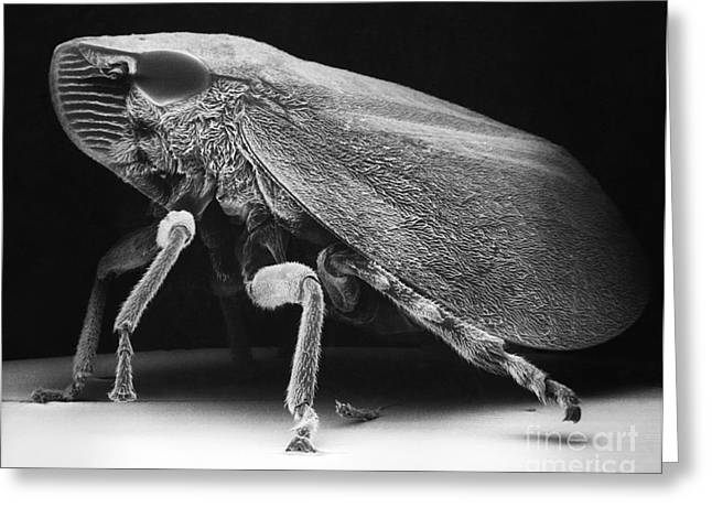 Leafhopper Greeting Card by David M. Phillips