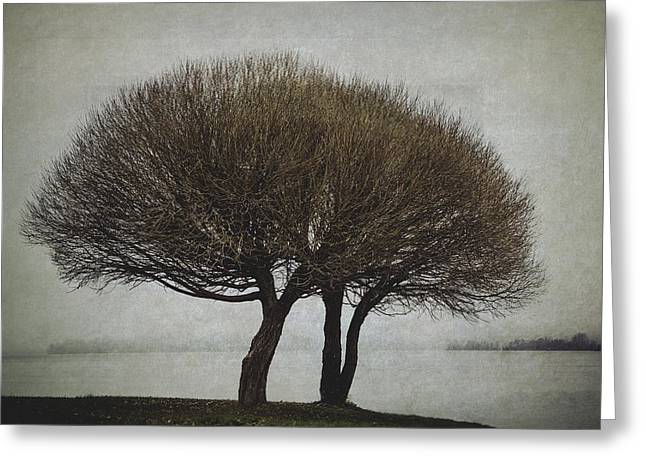 Lakescape Greeting Cards - Leafless Couple Greeting Card by Ari Salmela