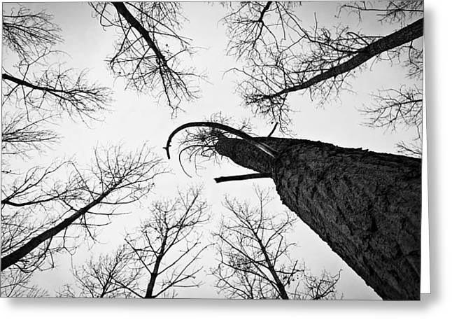 Deliberation Greeting Cards - Leafless Deliberation Greeting Card by Gabor Miskolczi