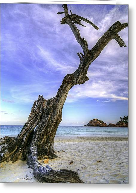 Redang Greeting Cards - Leafless Greeting Card by Mario Legaspi