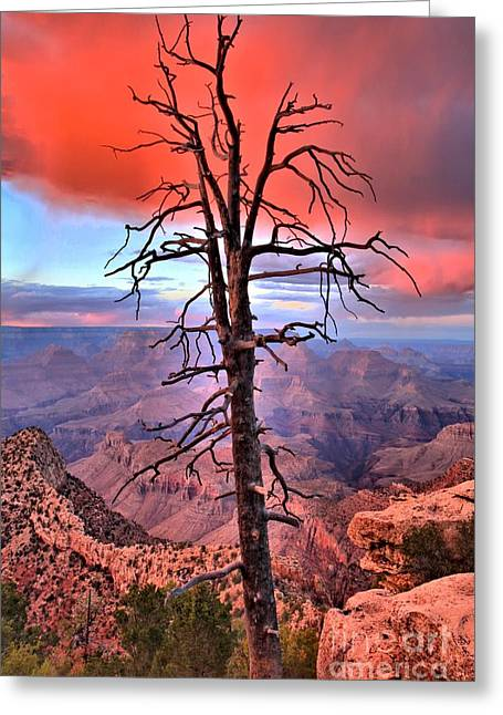 The Grand Canyon Greeting Cards - Leafless Sunset Greeting Card by Adam Jewell