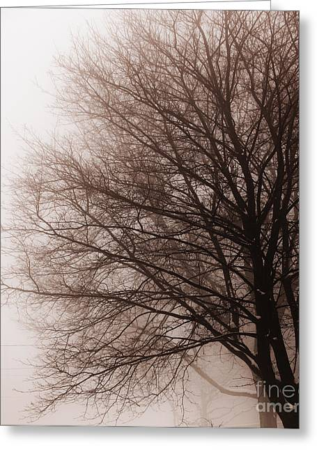 Frosty Greeting Cards - Leafless tree in fog Greeting Card by Elena Elisseeva