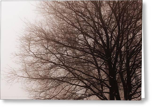 Leafless Tree In Fog Greeting Card by Elena Elisseeva