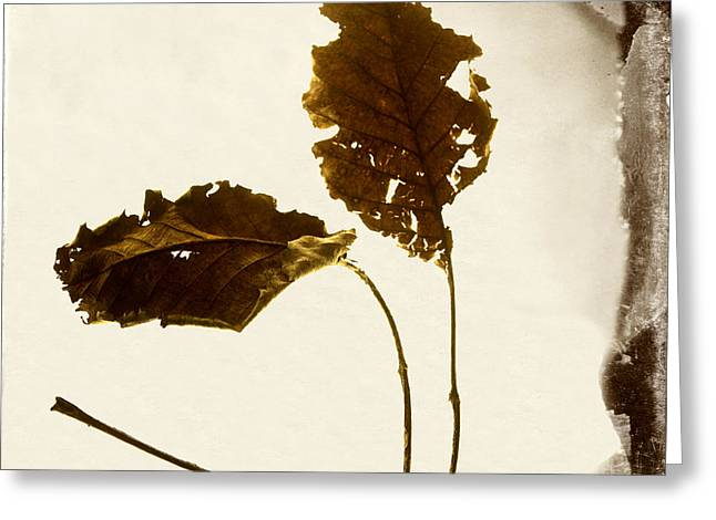 Aging Process Greeting Cards - Leafs Greeting Card by Bernard Jaubert