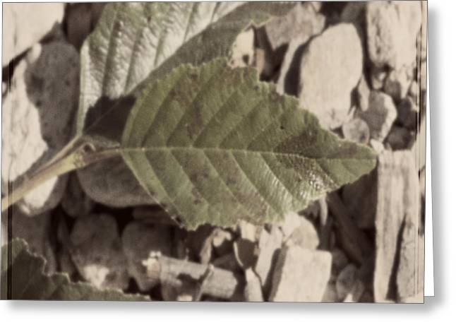 Square Print Greeting Cards - Leafs and Stones Greeting Card by Gilbert Artiaga