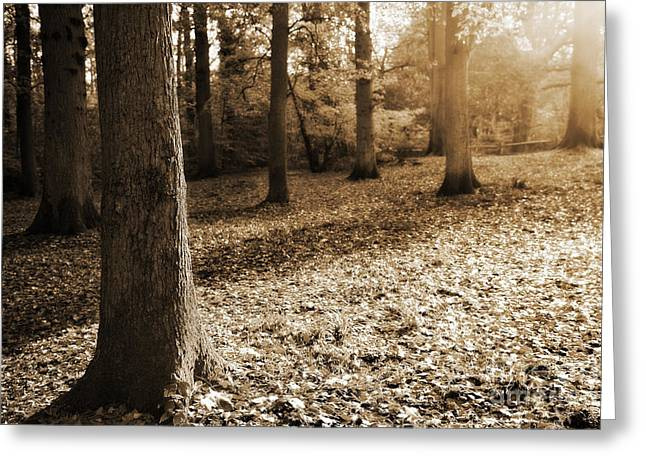 Lounge Digital Art Greeting Cards - Leafy Autumn Woodland in Sepia Greeting Card by Natalie Kinnear