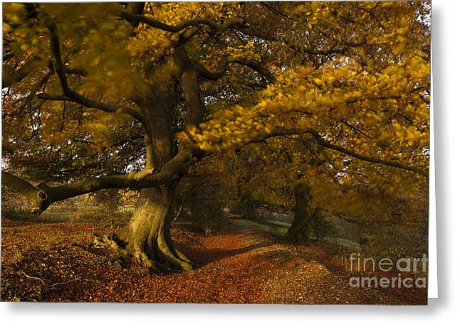 Warm Tones Greeting Cards - Leafy Lane Greeting Card by Anne Gilbert