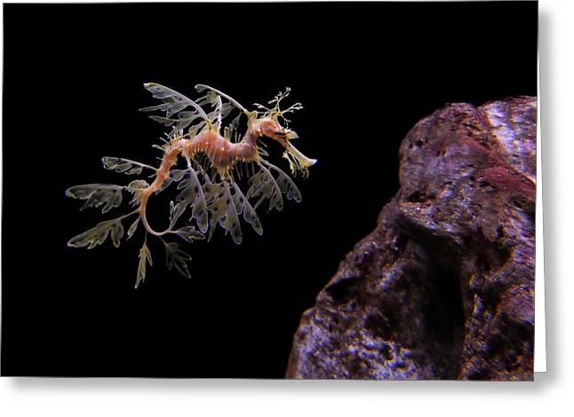Leafy Sea Dragon Greeting Card by Jonathan Sabin