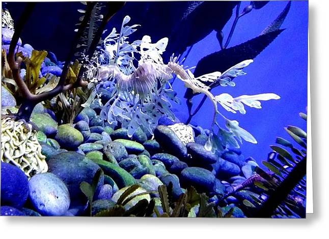 Leafy Sea Dragon Greeting Cards - Leafy Sea Dragon Greeting Card by Kelly Mills