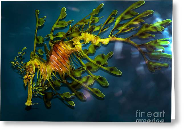 Leafy Sea Dragon Greeting Cards - Leafy Sea Dragon Greeting Card by Artist and Photographer Laura Wrede