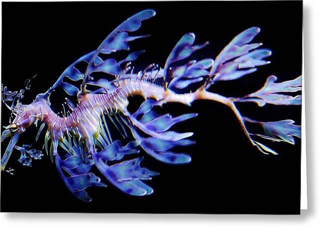 Paulette Thomas Greeting Cards - Leafy Sea Dragon Greeting Card by Paulette Thomas
