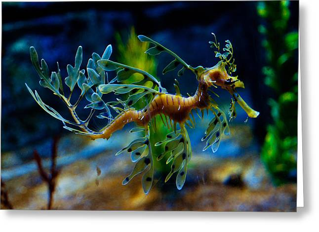 Leafy Sea Dragon Photographs Greeting Cards - Leafy Sea Dragon Greeting Card by Tim Nichols