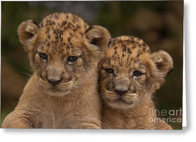 Lean on Me Greeting Card by Ashley Vincent