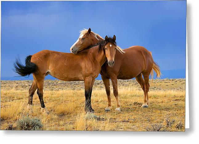 Wild Horses Greeting Cards - Lean on Me Wild Mustang Greeting Card by Rich Franco