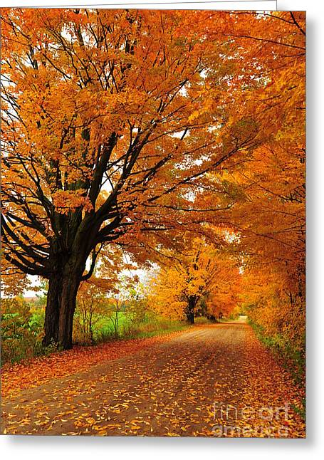 Forest Greeting Cards - Leaning Into Autumn 2 Greeting Card by Terri Gostola