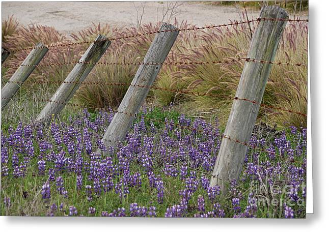 Crooked Fence Greeting Cards - Leaning into Springtime Greeting Card by Kris Hiemstra