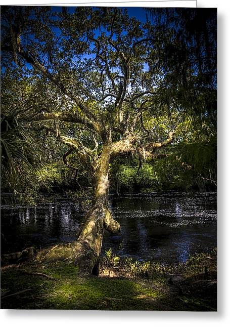 Leaning Oak Greeting Card by Marvin Spates