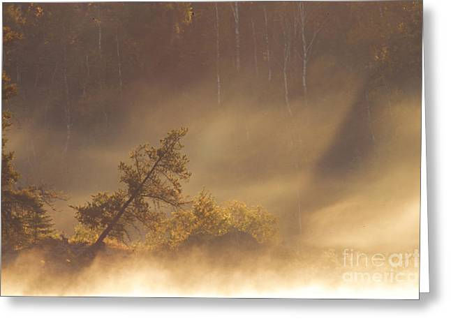 Boundary Waters Greeting Cards - Leaning Tree in Swirling Fog Greeting Card by Larry Ricker