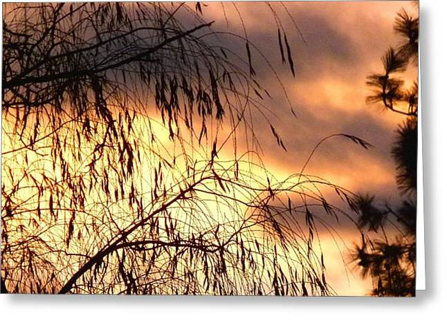 Willow Lake Greeting Cards - Leaning Willow Silhouette Greeting Card by Will Borden