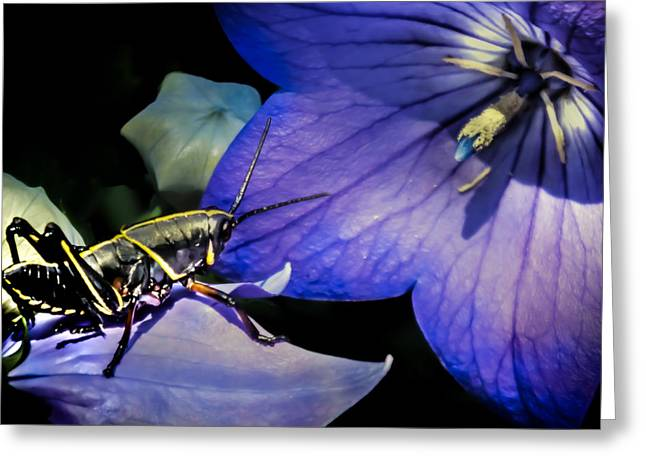 Grasshoppers Greeting Cards - CONTEMPLATION of a PISTIL Greeting Card by Karen Wiles