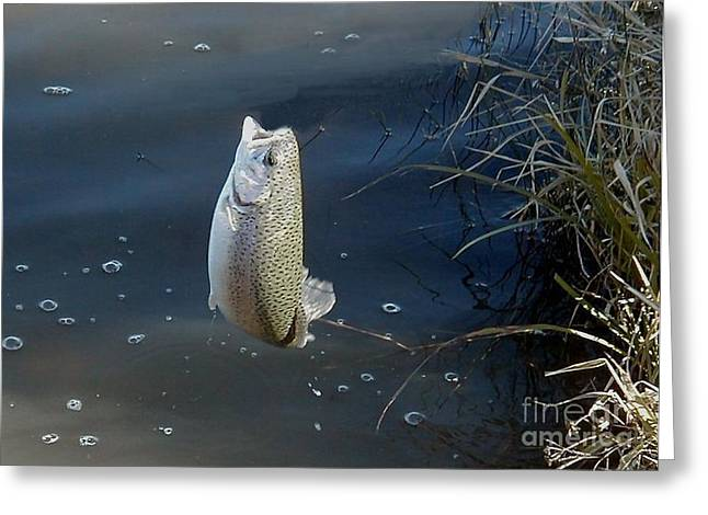 Leaping Trout Greeting Cards - Airborne Rainbow Trout Greeting Card by Ronald Gater