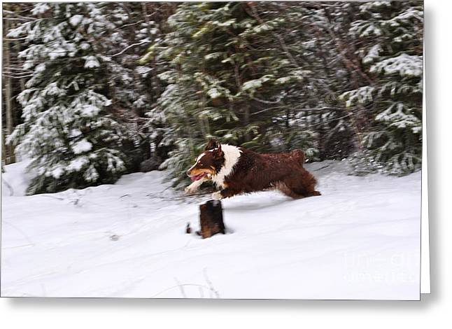 Dog In Snow Greeting Cards - Leaping the Log  Greeting Card by Susan Chesnut