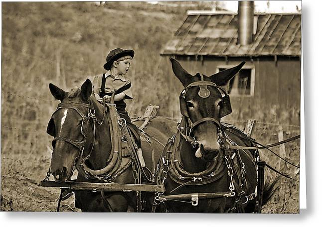 Equine Art Work Greeting Cards - Learning To Drive Greeting Card by Brian Graybill