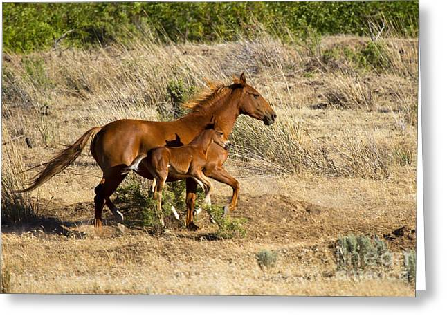 Wild Horse Greeting Cards - Learning to Run Greeting Card by Mike  Dawson